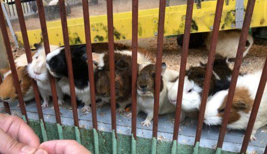 町田リス園で可愛い小動物と触れ合おう