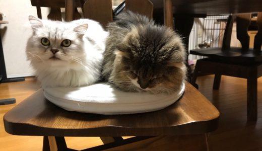 寒さに負けない!愛猫のための冬支度