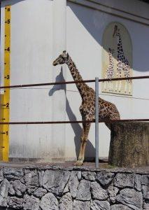 日本平動物園に行ってきました
