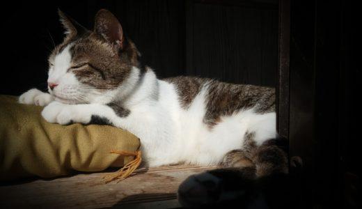 飼い主亡き後の猫ちゃんのその後はどうなるの?