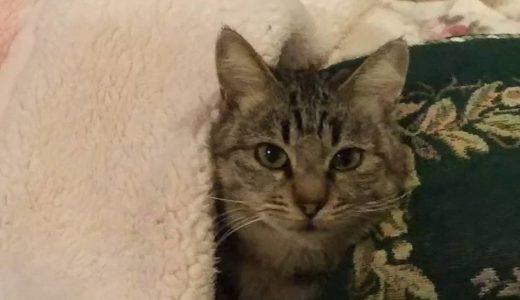 ツンデレ猫のすすめ~猟奇的な彼女との出会い