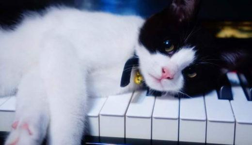 野良猫にエサをやる事は悪い事なの?その理由は