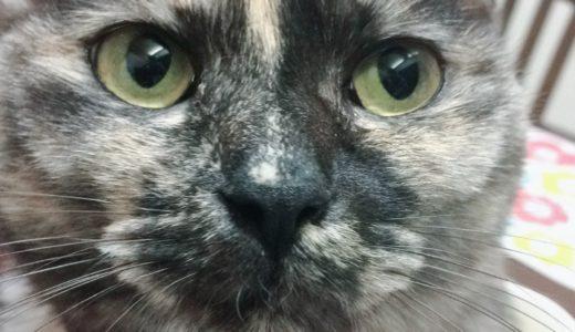 錆び猫ってどんな猫?