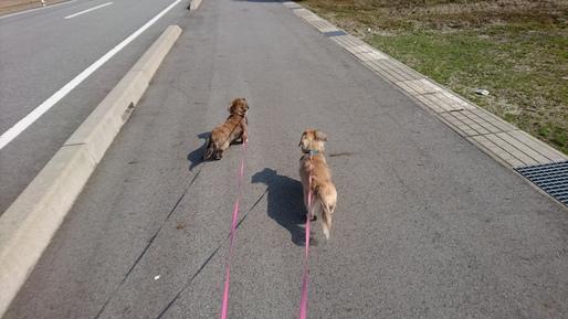 犬の散歩の目的とは?