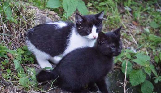 猫も認知症になるの?7歳以上のシニア猫は要チェック!