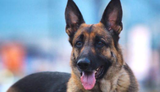 関節炎の愛犬を幸せにする方法とは?