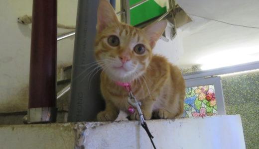 ベトナムで猫を飼う人はいる?どんな所で会えるの?