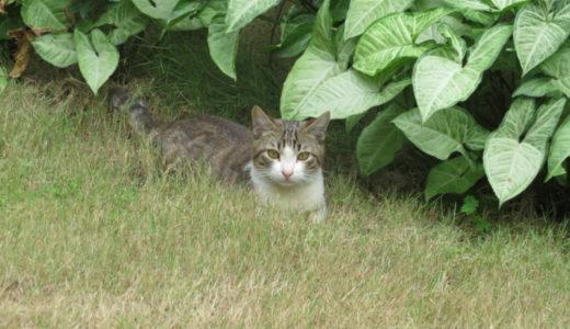 ホーチミンに住む猫ちゃん!飼い猫?それとも野良ちゃん?