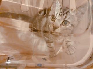 小さな子どもと猫は上手く生活出来るのか?