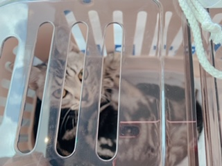 新幹線での大移動?!猫はどうやって乗車する?