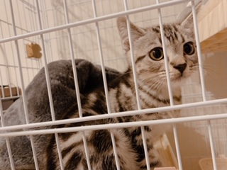 猫は大きな音が苦手?