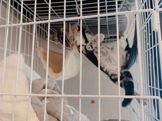 猫は自由な生き物…それなのになぜゲージ?