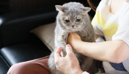 猫アレルギーの原因は何!?一緒には暮らせない!?