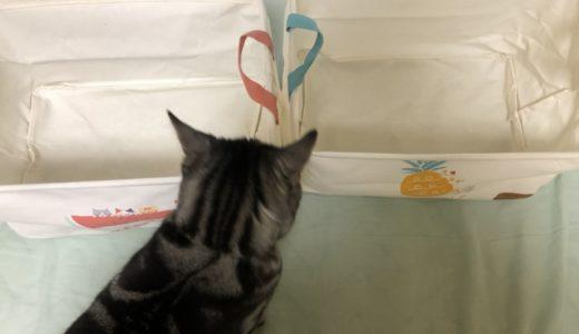 スイカ・パイン猫の収納ケース