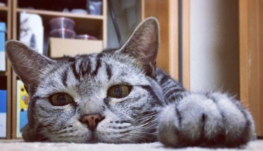 猫・気温によって変わる寝相