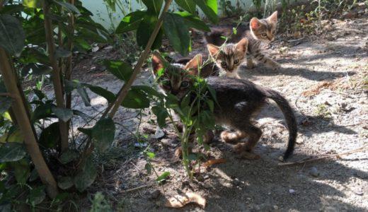 イスタンブールで猫の保護活動【その3】