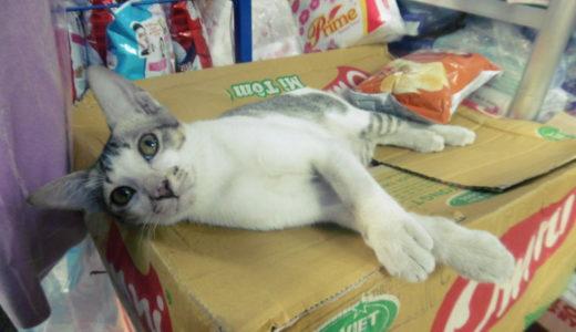 ベトナムの商店で飼われ始めた2匹の仲良し猫ちゃん!