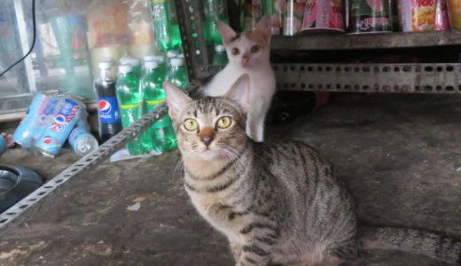 ベトナムの朝に何を飲む?お出迎えしてくれる猫ちゃんをご紹介