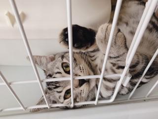 猫さんと暮らす上で気になる匂いの話