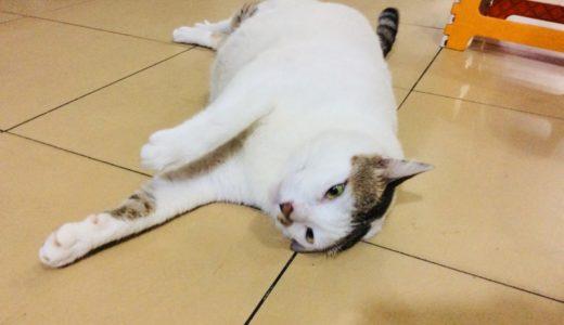 ベトナムで出会った太っちょ猫さん&フォー以外の麺料理のご紹介!