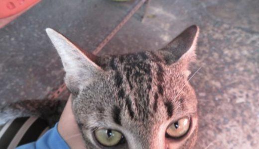 ベトナムで元気な猫ちゃんのベストショットを撮るためには?