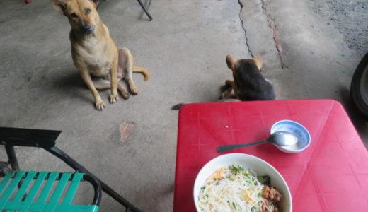 ベトナムの定番!?見知らぬ犬と一緒に朝食