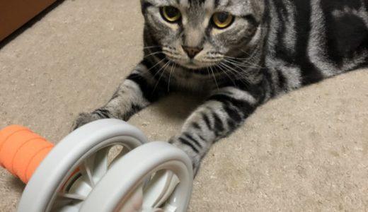 猫と腹筋ローラー