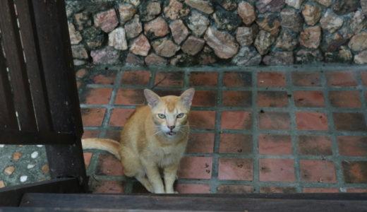 タイで出会ったフレンドリーな猫さん♪