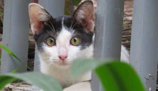 ベトナムのイオンモールに住んでいる猫ちゃん家族!
