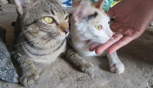 妊娠説も浮上!?「いい夫婦の日」のベトナムの猫ちゃん