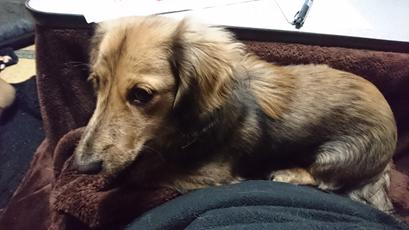 犬にもある?分離不安の症状や対策とは?