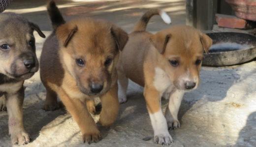 子犬がたくさん産まれた!ベトナムの麺料理屋さん