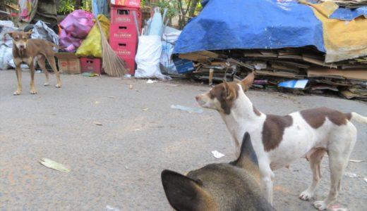 ベトナムの旧正月で出会ったワンちゃんたち!みんな働いている?