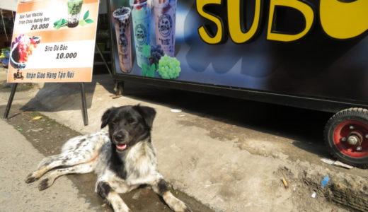 ベトナムのタピオカ屋の番犬?しっかり仕事してます!