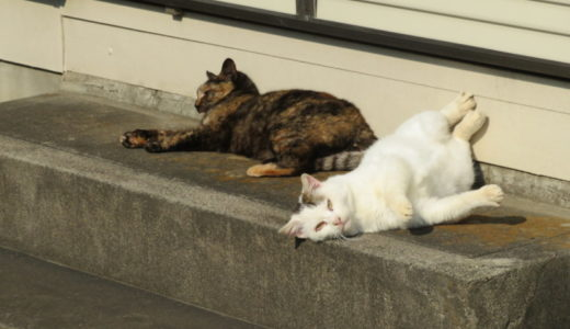 猫に恋愛感情はあるの?