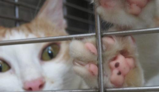 肉球で猫の性格が分かるって本当?
