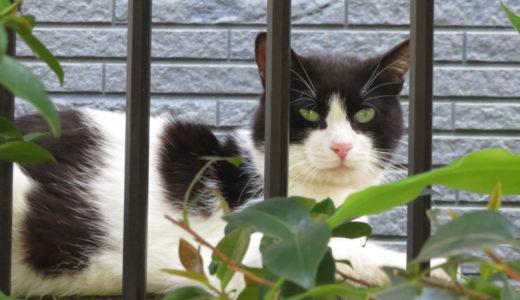 モテる猫とモテない猫の違いはあるの?