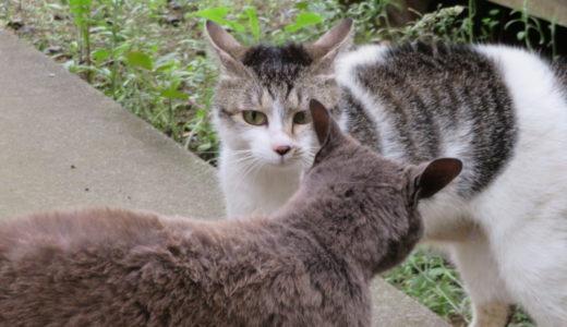 猫の仁義なきテリトリー争い