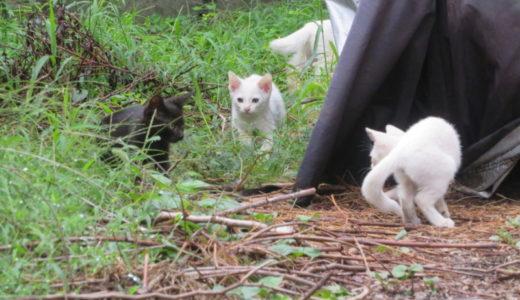 白猫が増殖中…地域猫とご近所関係