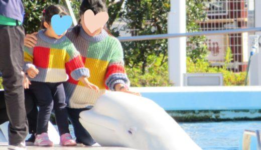 イルカに会える八景島シーパラダイスにお出かけ