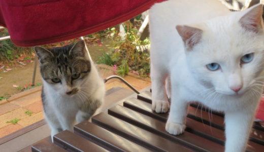 親猫の教育方針で仔猫の性格が変わる?