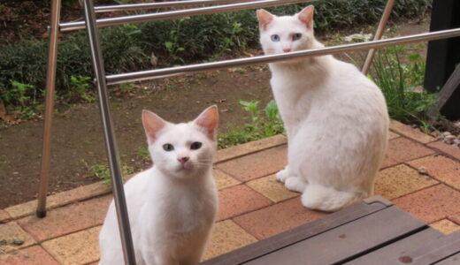 どんな仲?異母兄弟の猫の世界